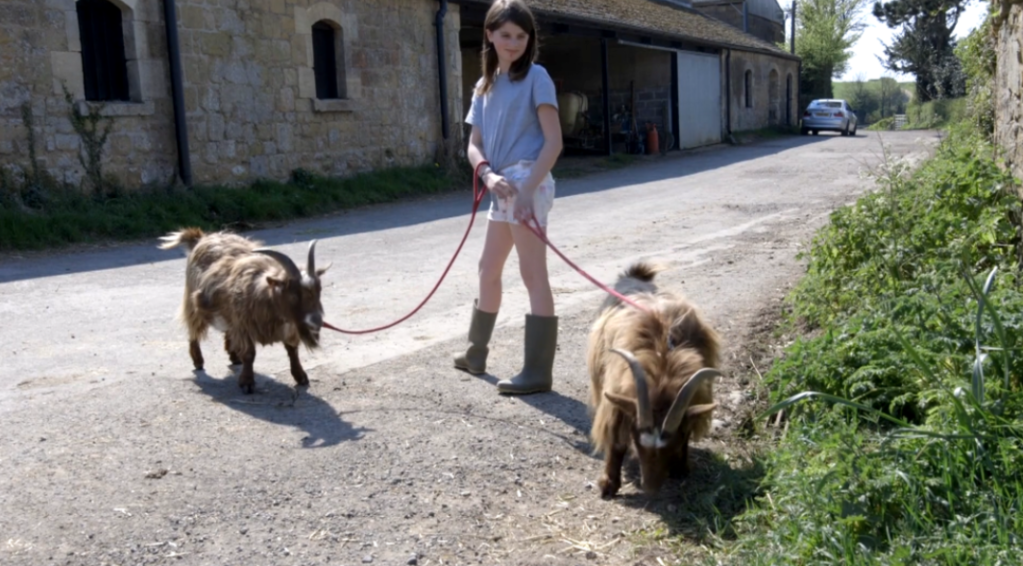 A woman with shoulder-length brunette hair wearing a t-shirt, shorts, and boots. She stands in a street while walking two goats on a leash, looking over at one of them.